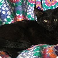 Adopt A Pet :: Raphael - Tampa, FL