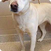 Adopt A Pet :: Bebe - Shorewood, IL