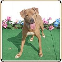 Adopt A Pet :: DESI - Marietta, GA