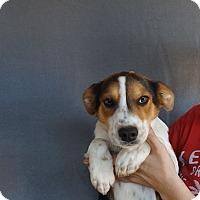 Adopt A Pet :: Yonah - Oviedo, FL