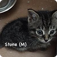 Adopt A Pet :: Stone - West Orange, NJ