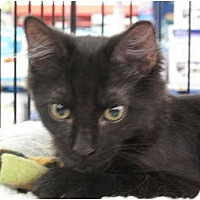 Adopt A Pet :: Hobo - Port Republic, MD