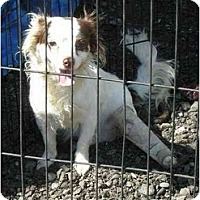 Adopt A Pet :: Ginger - Fowler, CA