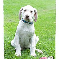 Adopt A Pet :: Tanner - Haverhill, MA