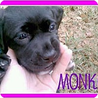 Adopt A Pet :: Monkey - Orlando, FL