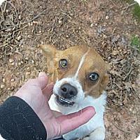 Adopt A Pet :: Poppy - Eden, NC