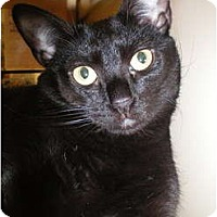 Adopt A Pet :: Hope - Jenkintown, PA