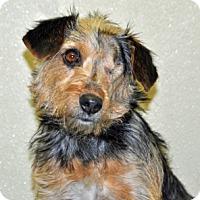 Adopt A Pet :: Tootsie - Port Washington, NY