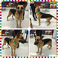 Adopt A Pet :: Hawkeye - Fort Worth, TX