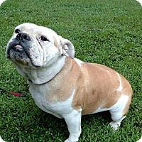 Adopt A Pet :: Blossom - Newark, DE