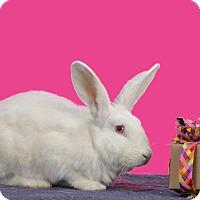 Adopt A Pet :: Elora - Marietta, GA