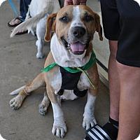 Adopt A Pet :: Willie - San Diego, CA