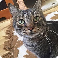 Adopt A Pet :: Daisy/LAP CAT/ Special Needs - Bryn Mawr, PA