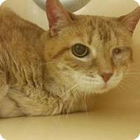 Adopt A Pet :: Ridgeview - Elyria, OH
