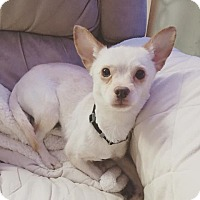 Adopt A Pet :: Teddy - East Randolph, VT