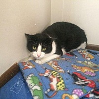 Adopt A Pet :: Rotini - Chaska, MN