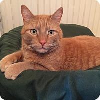 Adopt A Pet :: Otis - Colmar, PA