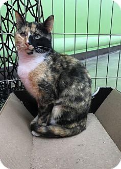 Adopt A Pet :: Suzette- Bi Colored Eyes!  - Devon, PA