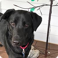 Adopt A Pet :: Monte - Rockville, MD