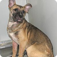 Adopt A Pet :: Pippa - Ruidoso, NM