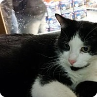 Adopt A Pet :: Ace - Woodbury, NJ