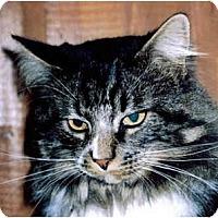 Adopt A Pet :: Butch - Medway, MA