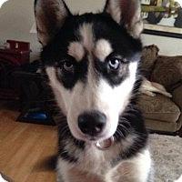 Adopt A Pet :: McKenzie - Brick, NJ