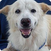 Adopt A Pet :: Joe - Hagerstown, MD