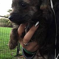 Adopt A Pet :: Uther - Lodi, CA