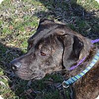 Adopt A Pet :: Cara - Ashtabula, OH