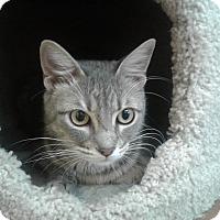 Adopt A Pet :: Mulan - Lake Charles, LA