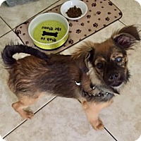 Adopt A Pet :: POPPY - Lithia, FL