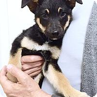 Adopt A Pet :: Matteo - Los Angeles, CA