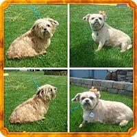Adopt A Pet :: Jill - Painted Post, NY