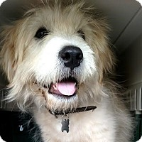 Adopt A Pet :: Bob Marley - Staten Island, NY