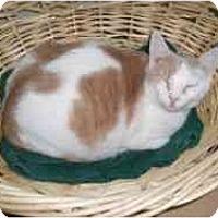 Adopt A Pet :: Heidi - North Boston, NY