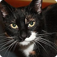 Adopt A Pet :: Precious (LE) - Little Falls, NJ
