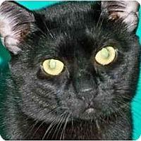 Adopt A Pet :: Roger Sterling - Secaucus, NJ