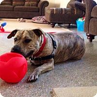 Adopt A Pet :: MINNIE MUFFIN - Boca Raton, FL