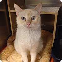 Adopt A Pet :: Sugie Bear - Muncie, IN