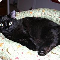 Adopt A Pet :: Twizzy - St. Louis, MO