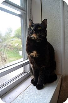 Domestic Shorthair Cat for adoption in Broadway, New Jersey - Paula