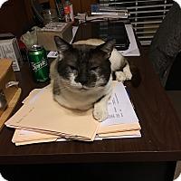 Adopt A Pet :: Boss - Randleman, NC