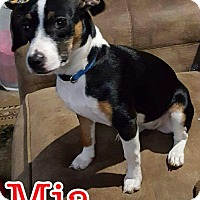Adopt A Pet :: Mia pending adoption - Manchester, CT