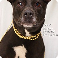 Adopt A Pet :: Macy - Newnan City, GA