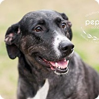 Adopt A Pet :: Pepper - Kansas City, MO