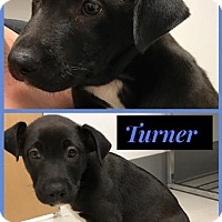 Adopt A Pet :: Turner - Miami Shores, FL