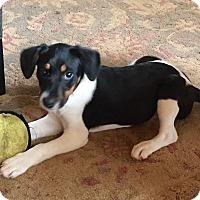 Adopt A Pet :: SOPHIE - Fishkill, NY