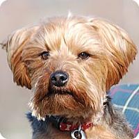 Adopt A Pet :: Moe - Providence, RI