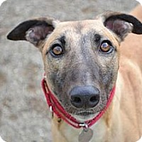 Adopt A Pet :: Ed (Dineroed) - Chagrin Falls, OH